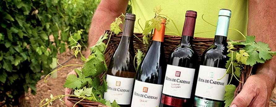 Acuerdo con las bodegas Vicente Gandía, uno de los vinos más prestigiosos de la D. O. Utiel-Requena